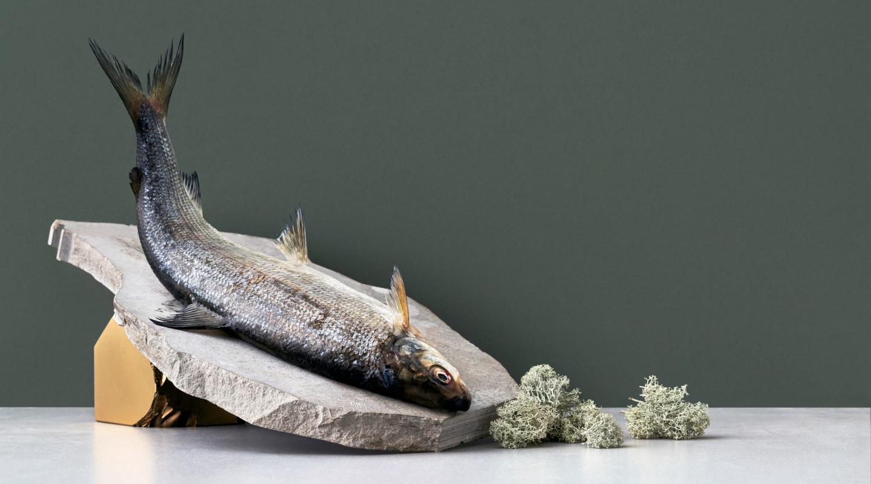 Fennopromo brändikuva kala